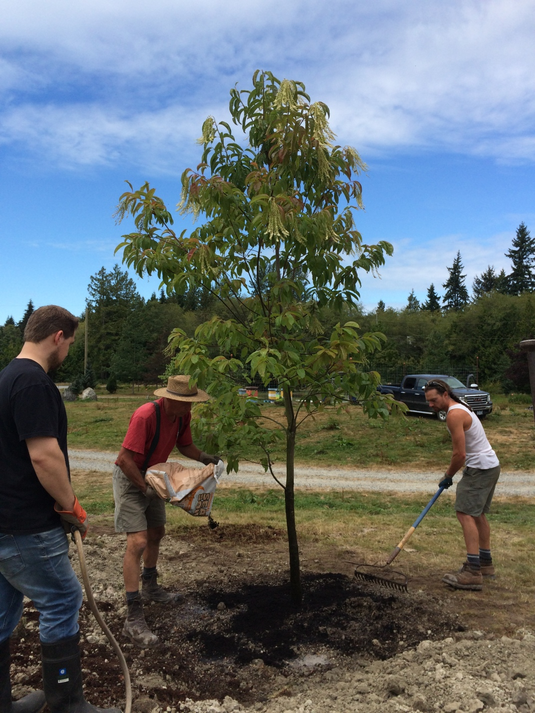 1 of 6 trees for the bees at this location
